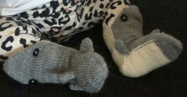 Knitted shark socks for a baby